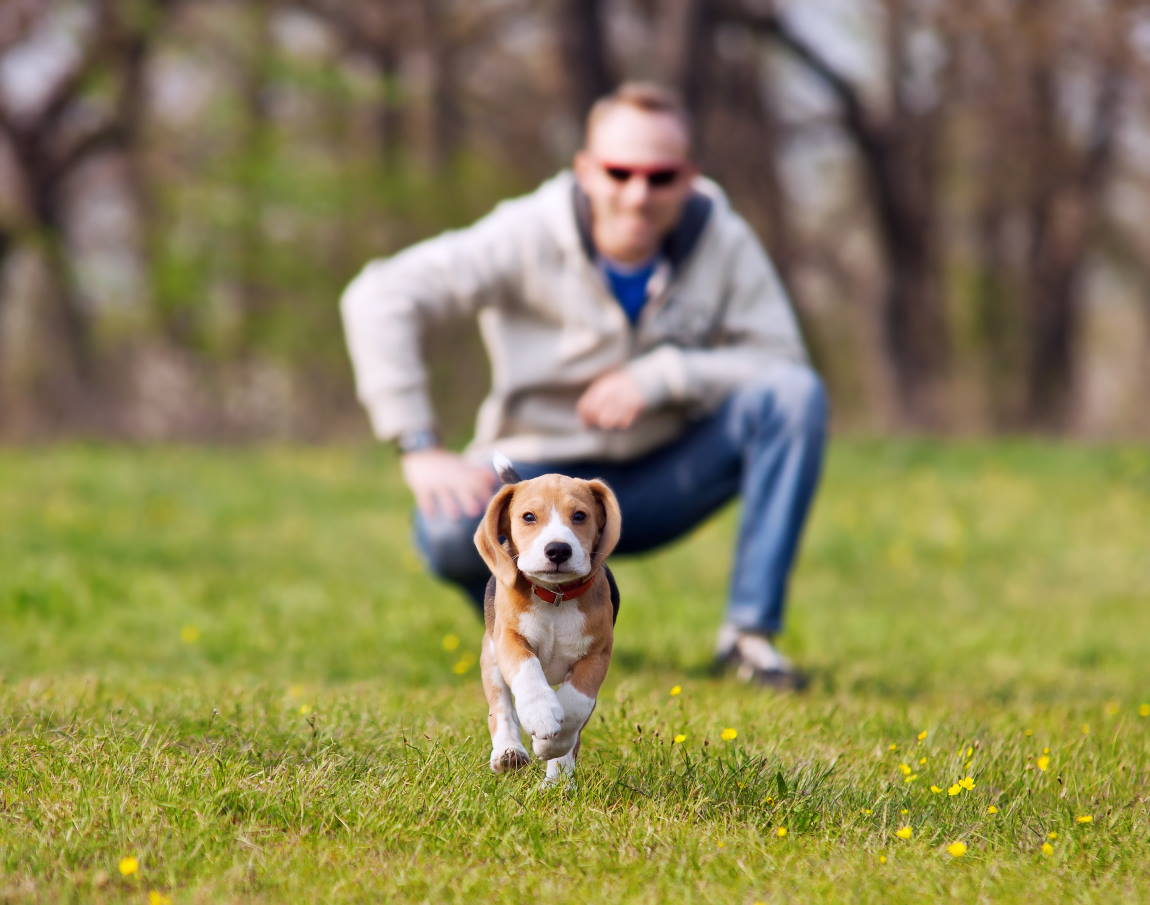Dog Off-Leash Area Consultation