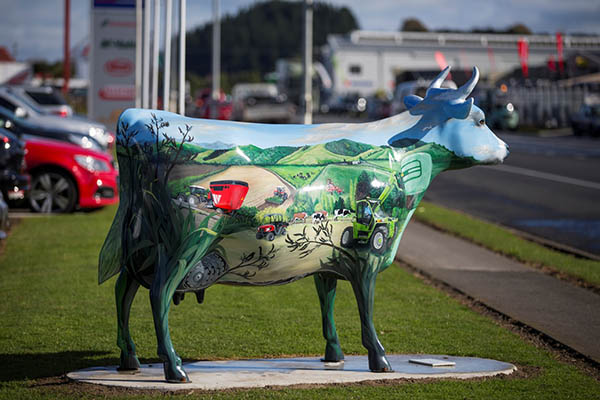 cows morrinsville