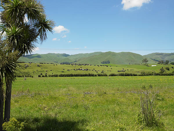 land matamata-piako quality soils farming land